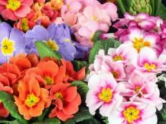 ¿A qué hora se produce el equinoccio de primavera?