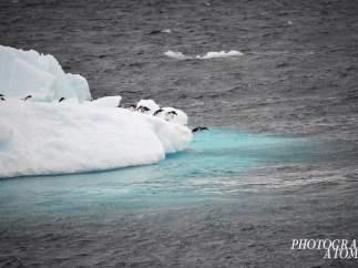 10 días en la Antártida