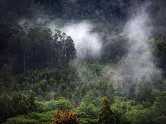 Paisaje verde entre Ribadeo y Viveiro, Galicia, España.