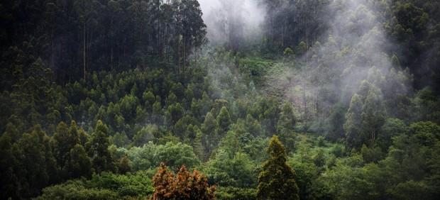 TRIVIAL: ¿Cuánto sabes de bosques?