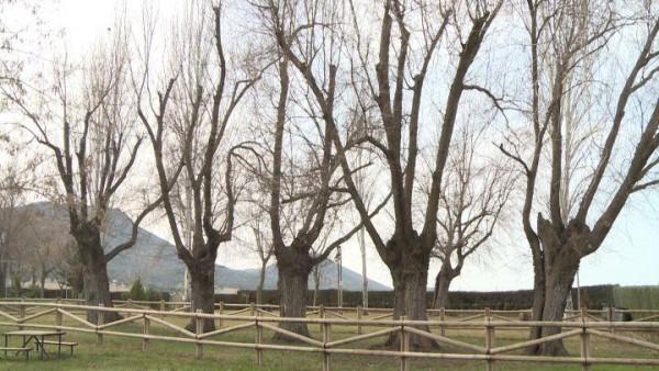 Olmos Centenarios de Cabeza Del Buey