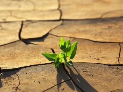 Planta verde que crece entre la tierra agrietada, consecuencia del calentamiento global.