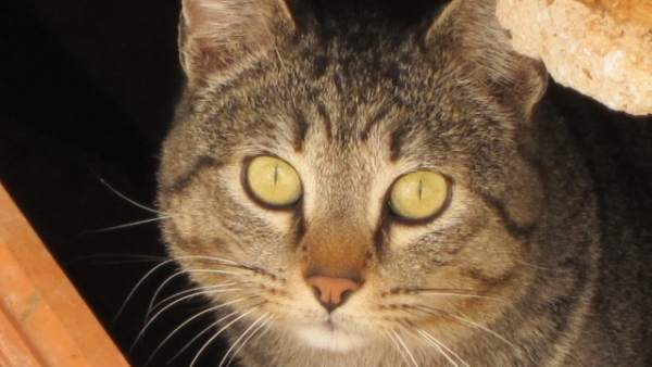 Gato, gatos, animales, mascotas, animal, mascota, colonia de gatos