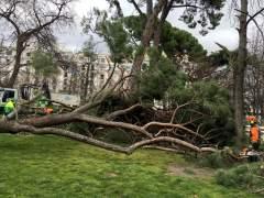 Muere un niño de 4 años tras caerle un árbol en el parque del Retiro