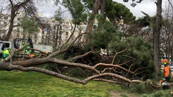 Muere un niño al caerle un árbol en El Retiro