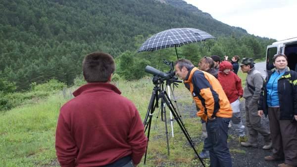 Un grupo de personas observa aves.