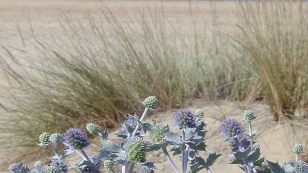 Playa de Huelva.