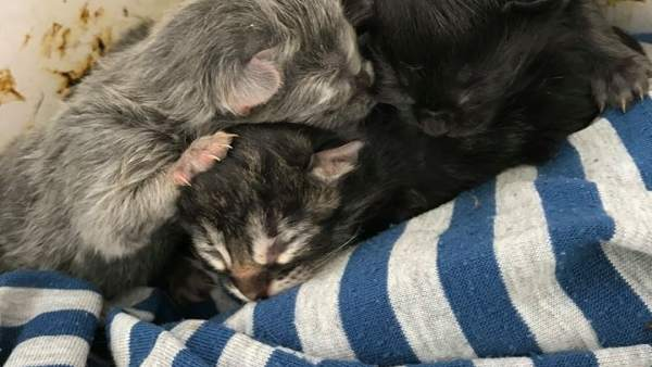 Gatos rescatados por la Policía Local de Tías