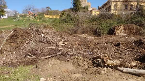 Arboricidio denunciado en Gandul