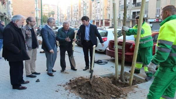 Plantación de árboles en el Distrito Cerro-Amate de Sevilla