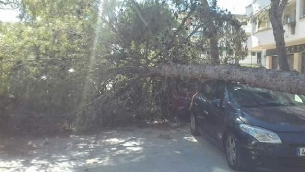El viento supera los 100 km/h y tumba los árboles en Cataluña