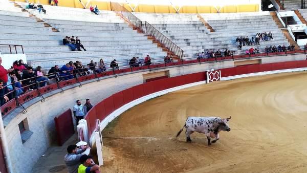 Desencajonamiento de toros en Los Barrios (Cádiz)