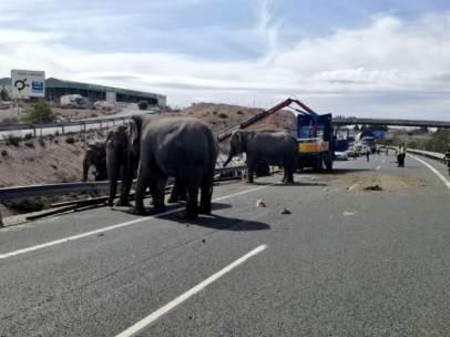 Los elefantes, sueltos por la carretera