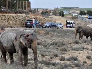 Elefantes en Albacete