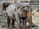Elefantes en accidente