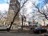 Regeneración de árboles en la Castellana
