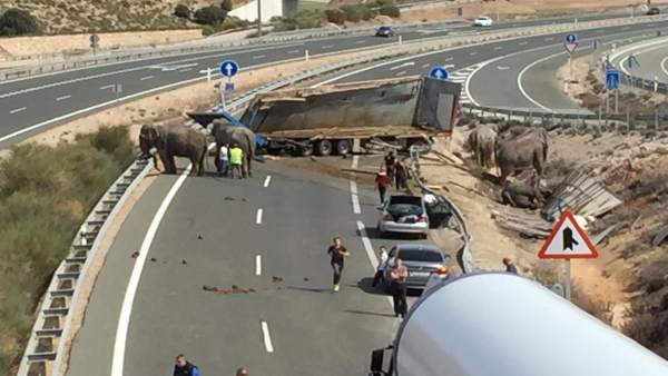 Elefantes accidentados en la A-30