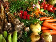 Vegetales y ornamentales provenientes de la agricultura sostenible
