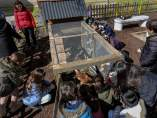 Cuatro gallinas se convierten en las nuevas inquilinas de un colegio