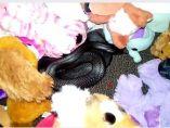 Serpiente entre juguetes