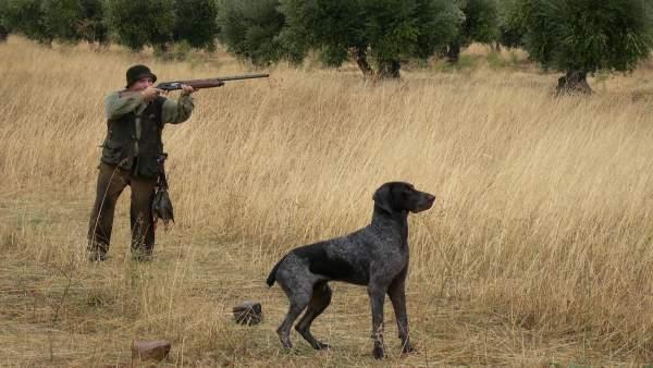 Cazador cazando