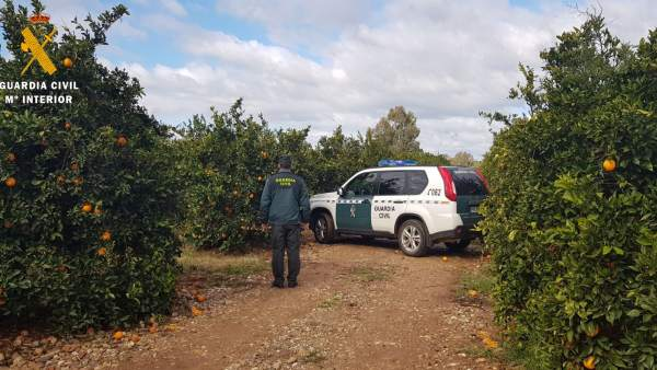 Actuación de la Guardia Civil contra robos de naranjas
