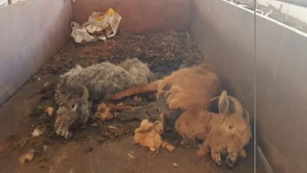 Invetigado un vecino de Ourense por abandono de animales domésticos.