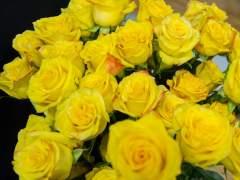 Los floristas piden que se eliminen los puestos de rosas ilegales por Sant Jordi