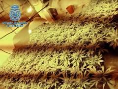"""""""Guardería"""" de marihuana en Almería"""