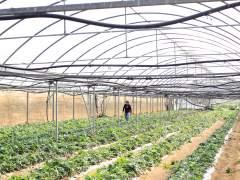 La superficie ecológica en España sigue aumentando