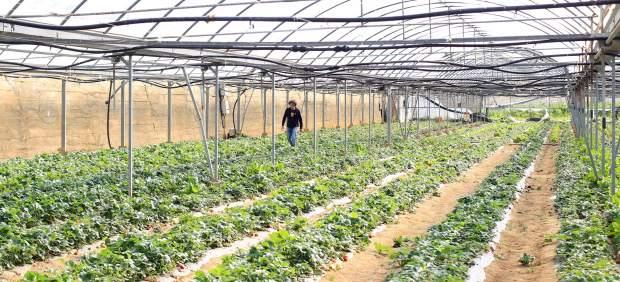 El consumo de productos bio reduce en un 25% el riesgo de cáncer, según un estudio