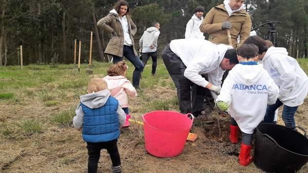 Un árbol nuevo, programa de reforestación de Abanca este domingo 22 de abril