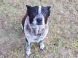 Max, el perro que guió a la Policía hasta la pequeña Aurora
