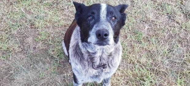 Un perro sordo y ciego ayuda a encontrar a una niña de 3 años perdida