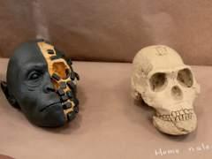 Así es el 'Homo naledi', el misterioso eslabón de la evolución humana