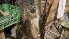 Graban el interior de un criadero ilegal de perros en Madrid
