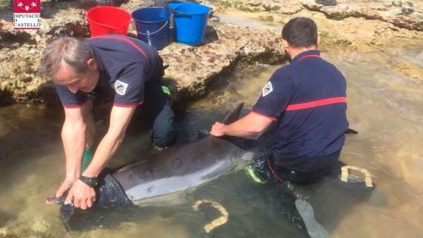 Rescate de un delfin llevado a cabo por los Bomberos