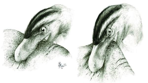 Ilustración que muestra la alimentación por punción y arrastre en terópodos