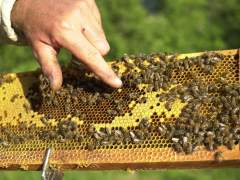 Unos robots podrían salvar a las abejas de los pesticidas