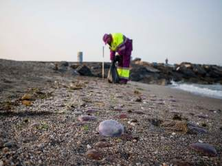 Un operario municipal recoge medusas en la orilla de la playa de El Zapillo