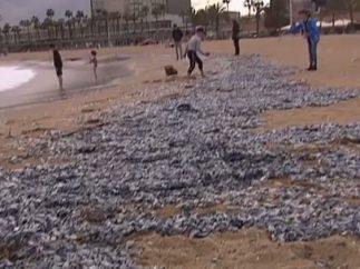 Miles de medusas