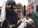 Reviven a un perro en Chile