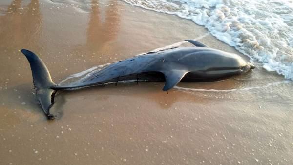 Varamiento de cetáceos