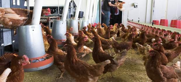 Oria visita la granja avícola de huevos ecológicos en Anero