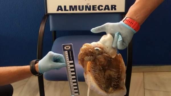La Policía Local de Almuñécar decomisa a dos buzos 17 kilos de sepias y pulpos