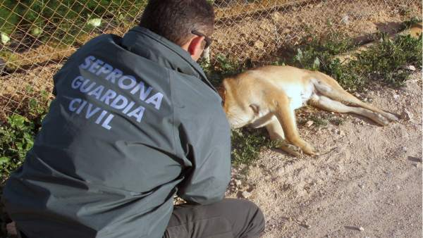 Seprona Guardia Civil, maltrato animal
