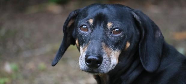Superar la adicción al alcohol con la ayuda de un perro, un proyecto pionero en España