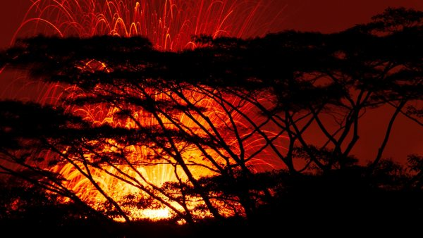 Erupción tras los árboles