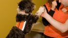 Perros que ayudan a adolescentes tutelados