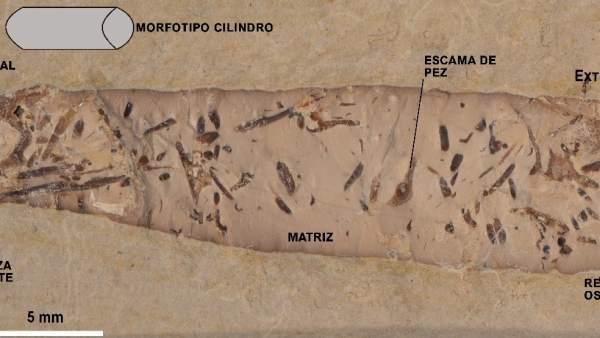Heces fósiles revelan información sobre la vida en el Cretácico